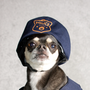 Officer Chihuahua funny stories