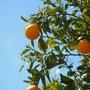 Orange Love color stories