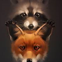 The Fox and the Coon racoon stories
