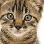 Warriors: Dakotas Rise my real house cats stories