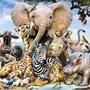 10 Animal Fun Facts   Part 1 animals stories