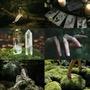 Green poetry stories