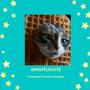 Creator Spotlight: @wafflecatz creator spotlight stories