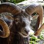 Aries zodiac stories