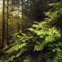 ϚìӀҽղէӀվ  forest stories