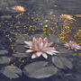 "Poetry Club Entry  ""Water Lily"" ~by Senpaii poetry club stories"