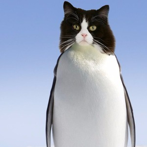 Penguin Cats photoshopped cat stories