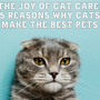 The Joy of Cat Care: 5 Reasons Why Cats Make the Best Pets cats stories