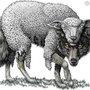 """A """"Sheep"""" daily stories"""