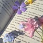 Spring Beauty ri stories